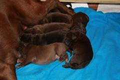 4 Tage nach der Geburt